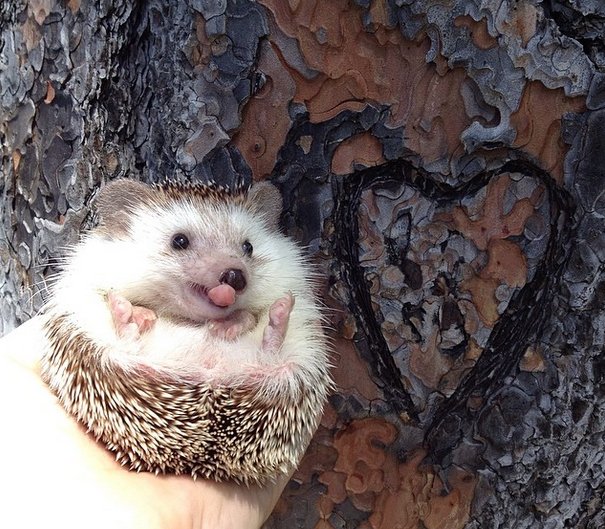 Traveling hedgehogs are an instant Tuesday pick-me-up