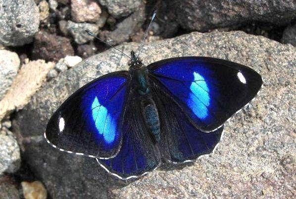 Beautiful flutterby