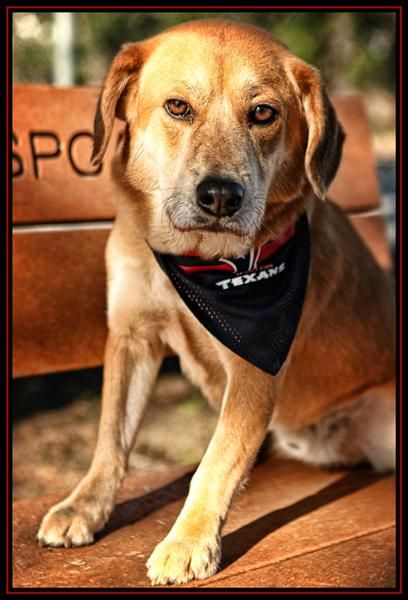 Say Hello To Canalo The Houston Spca Pet Pick Of The Week Canalo Urges You To Take A Moment And Vote For The Houston Spca To Win Animals Shelter Dogs Doggy