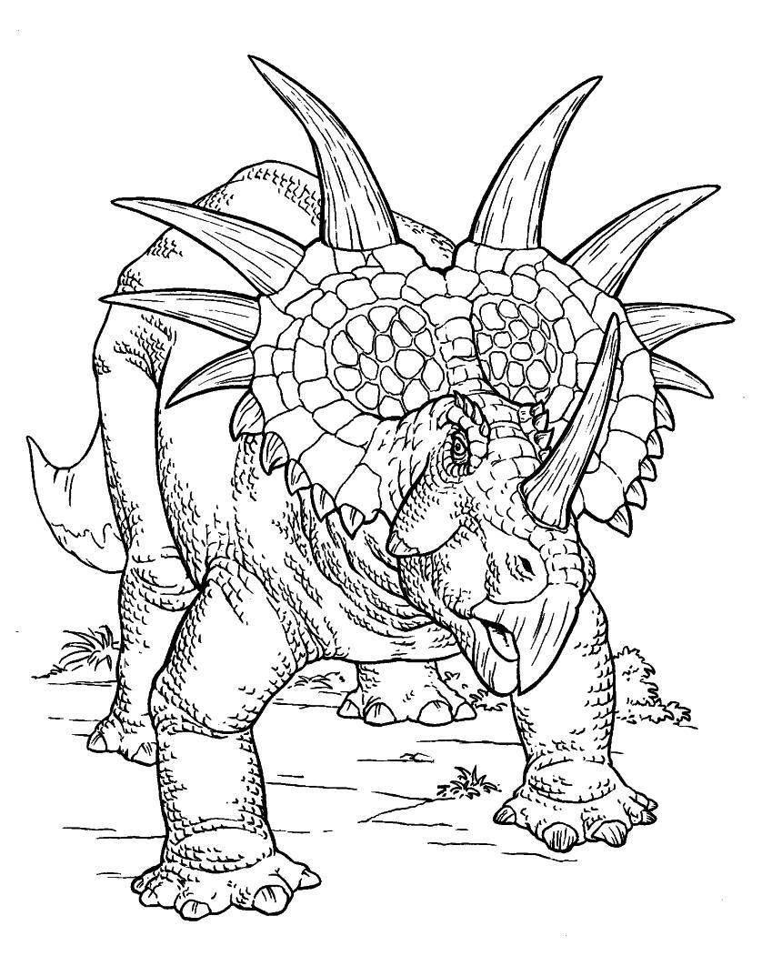 Triceratops Kolorowanka Moose Art Art Coloring Pages