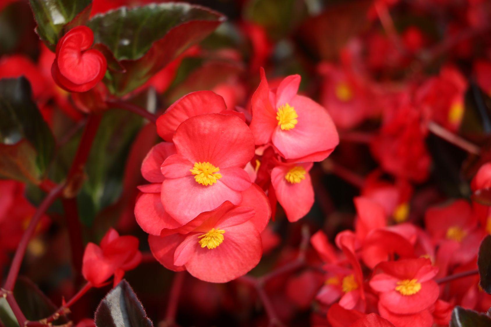 Jakie Kwiaty Kwitna Jesienia Fall Flowers Flowers Plants