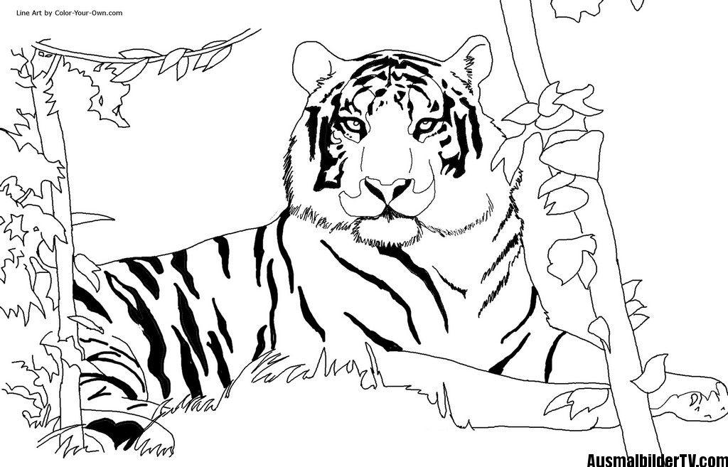 tiger ausmalbilder | Games for indoor activities kids | Pinterest ...