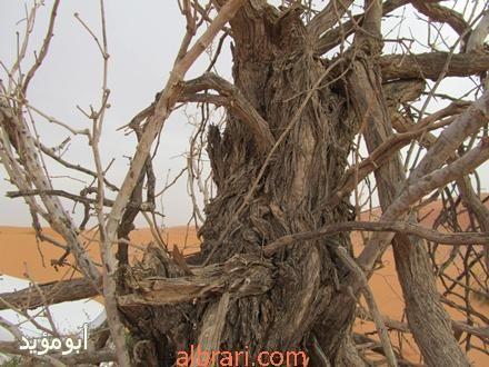 Desert Travel Grape Vines Grapevine Wreath
