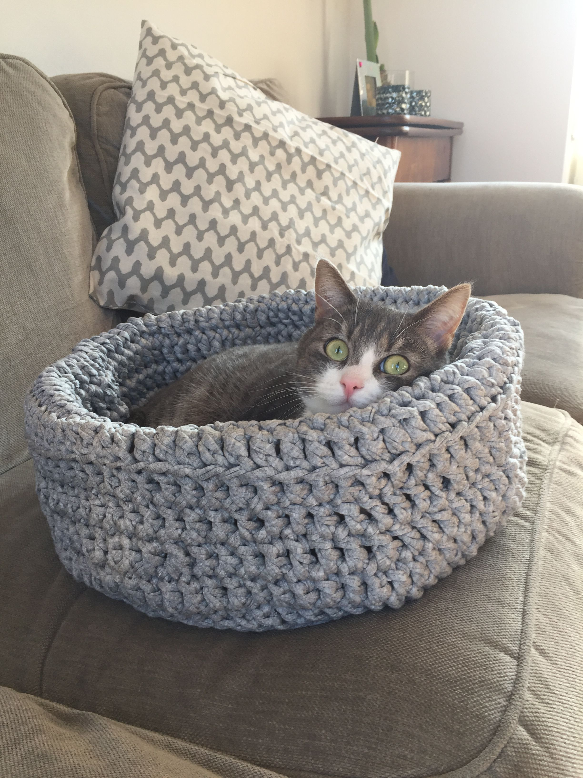 Tap the link to check out great cat products we have for your little ...