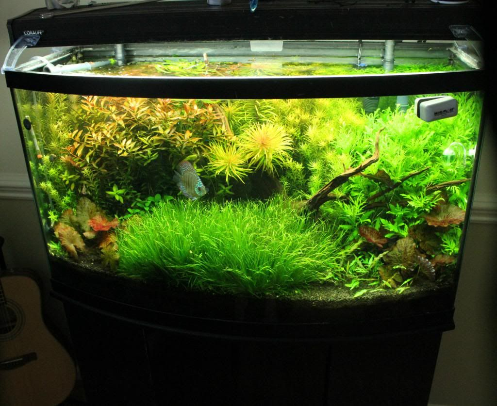 46 gallon bow front set up page 9 ape aquatic plant for Bow front fish tank