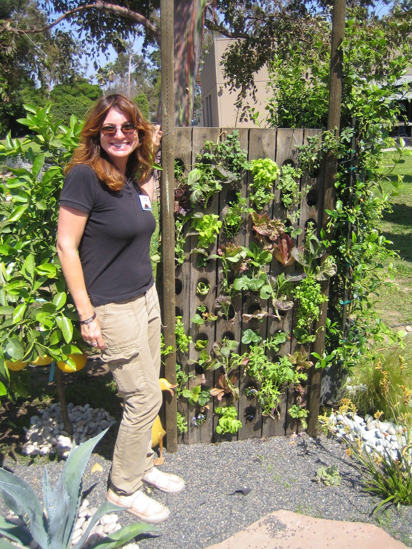 groenten en kruiden in een rek voor wijnflessen, maar kan ook in een pallet (wortels in cocosmatten)