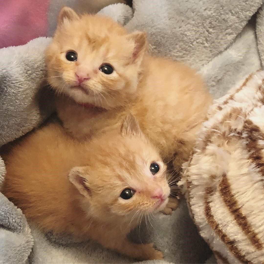 Source Instagram Com Amazing Cats Worldwide Tiffanyfosterkittens Full Tummies Peed Pooped Baby Wipe Baths Clean B Cats And Kittens Cat Lovers Animals