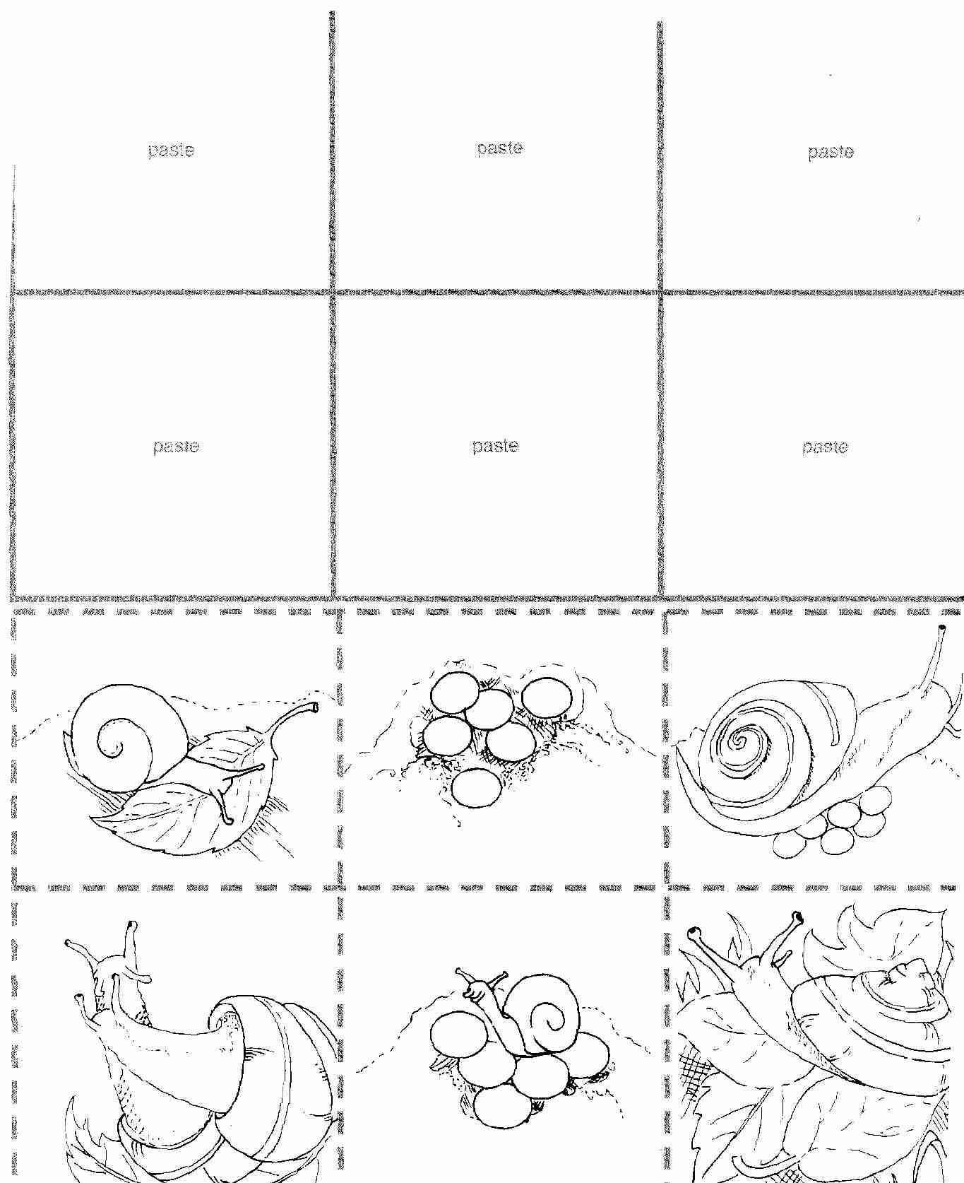 afficher l 39 image d 39 origine schnecken schnecken arbeitsbl tter und kindergarten ideen. Black Bedroom Furniture Sets. Home Design Ideas