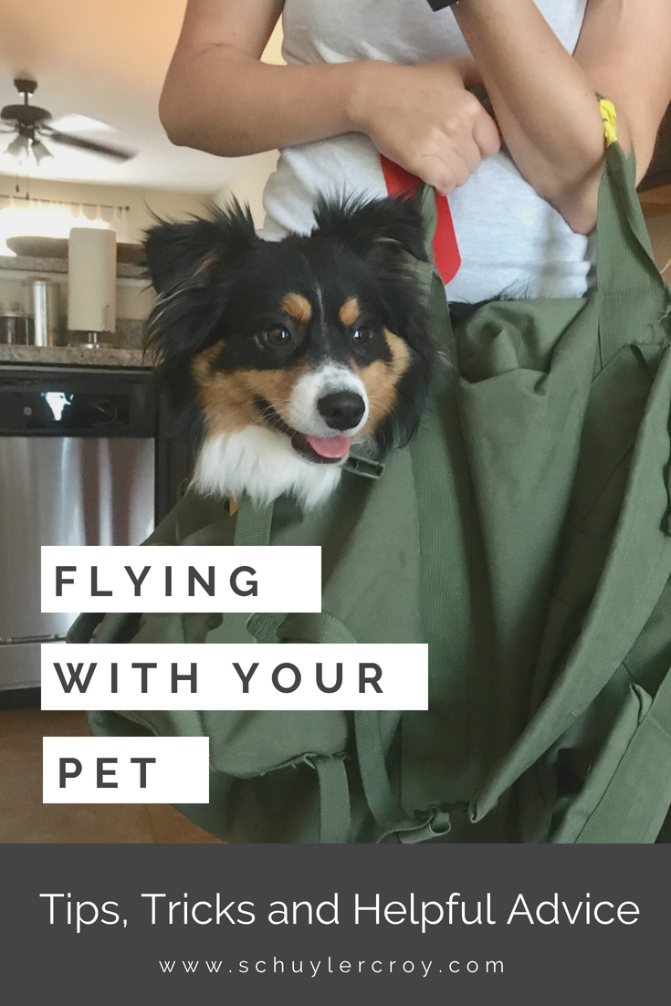 Flying With Your Pet Flying With Pets Pet Travel Military Jobs