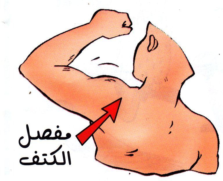 بحث حول الأجزاء الرئيسية لجسم الإنسان دور المفاصل الموسوعة المدرسية Blog Posts Blog Post