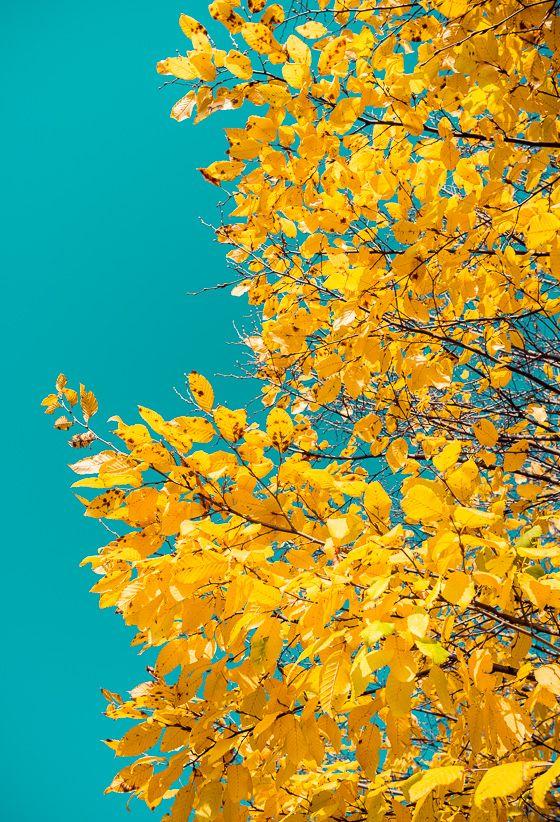 autumn colors - Fotoblog Julius