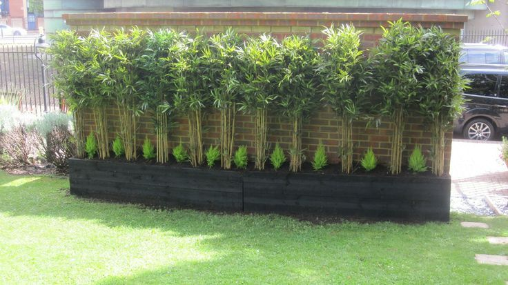 Bamboo Chinese Dwarf Bamboo Google Search Artificial Grass Wall