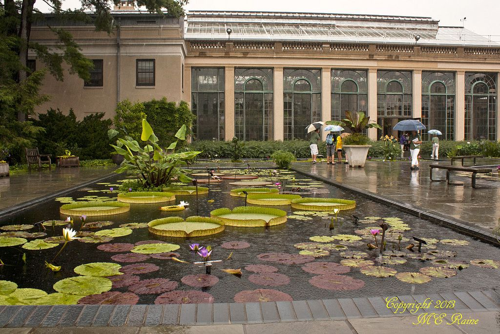 Waterlily Court in Rain at Longwood Gardens of