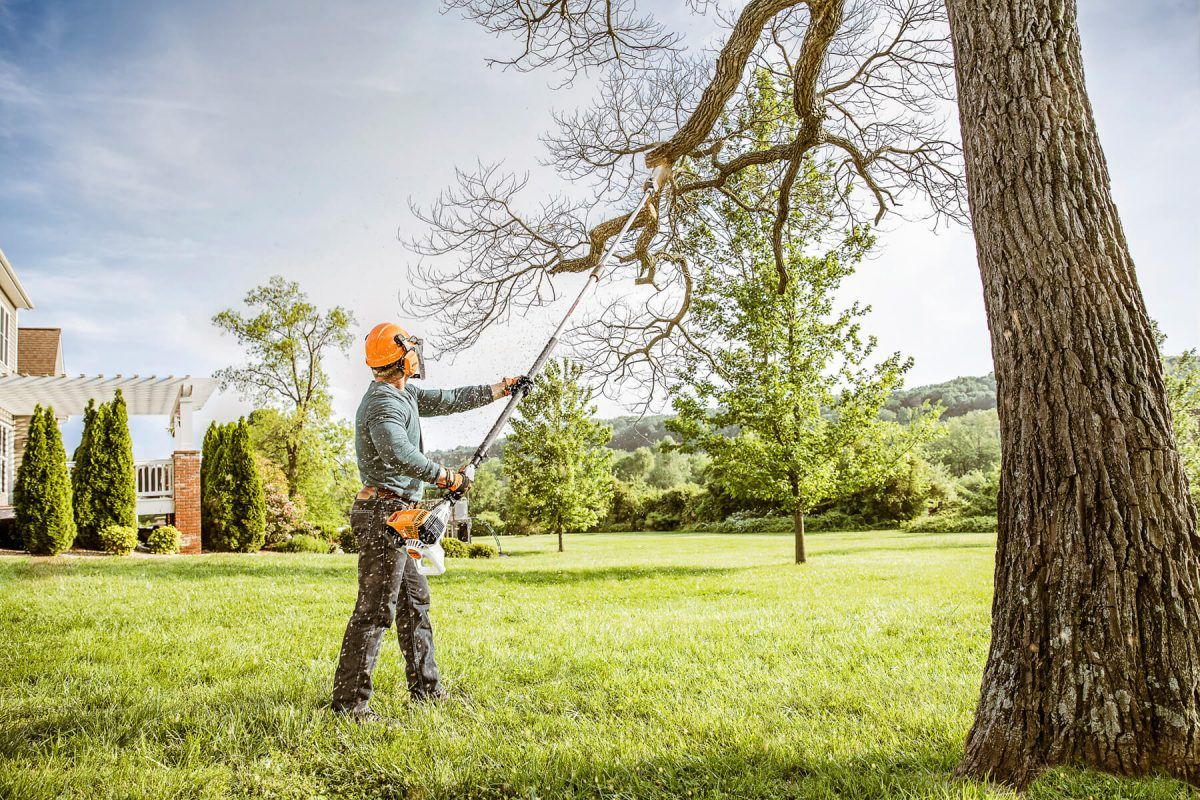 garden and tree services on Pin On Garden Advice