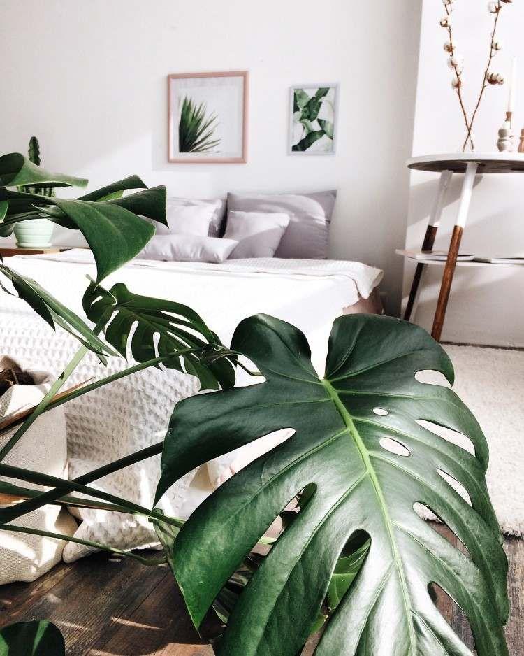 Plante pour chambre coucher id es vertes consid rer fonds images plante chambre - Plante verte chambre a coucher ...
