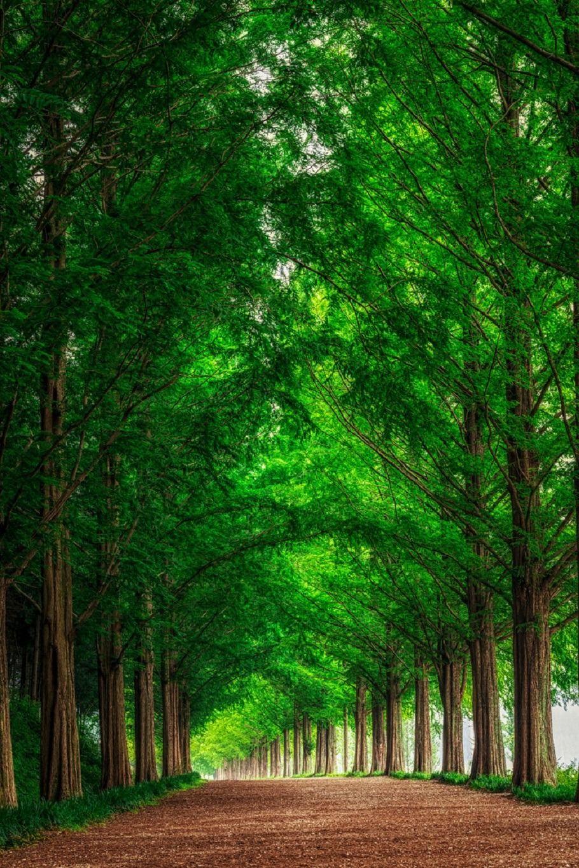 Sublim Ature Damyang South Korea Aaron Choi Landscape Wallpaper Nature Tree Beautiful Nature