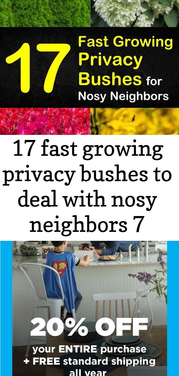 17 fast growing privacy bushes to deal with nosy neighbors 7 Discover 17 privacy bushes and shrubs that are perfect for screening your backyard front yards patio and driv...