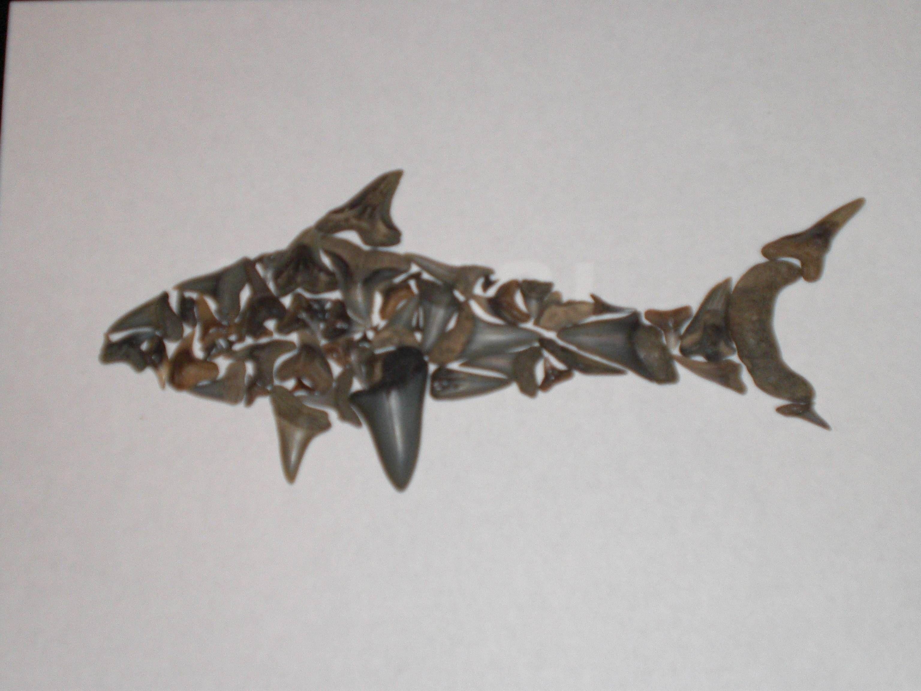 Shark made of shark's teeth