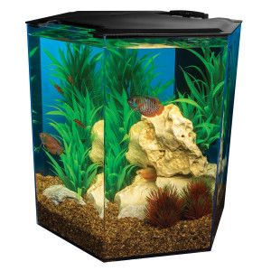 Marineland 5 gallon eclipse hexagon aquarium aquariums for Betta fish tanks petsmart