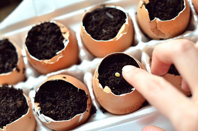 a great way to start your seeds indoors is by planting