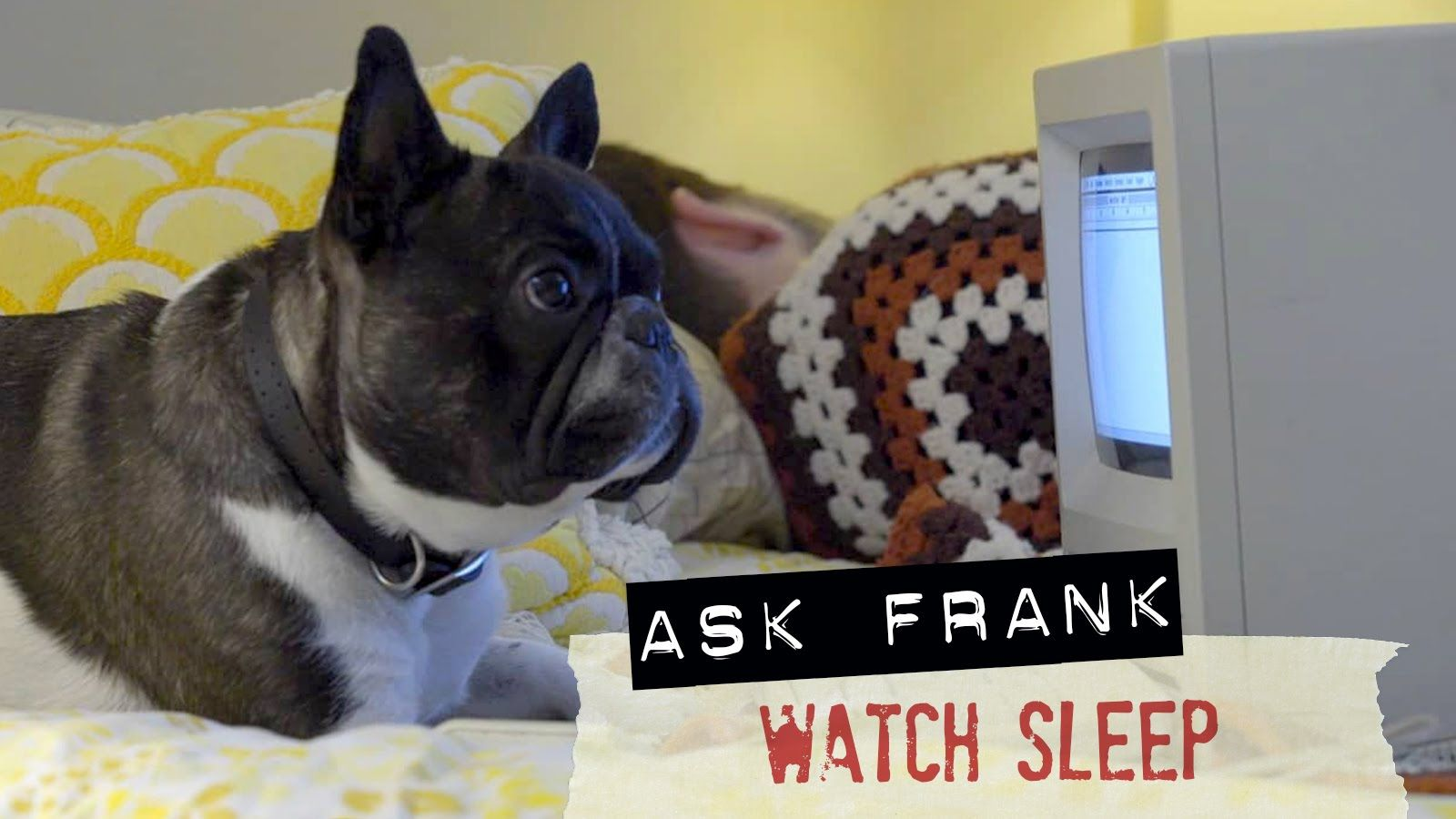 Watch Sleep - #023 Ask Frank: Advice for Dogs. By a Dog.