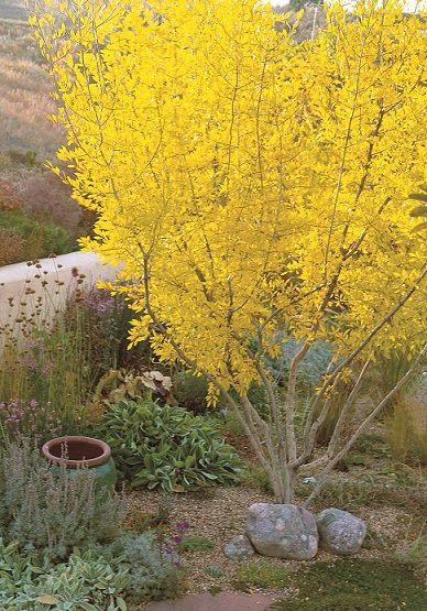 Waterwise Plants California Native Garden Plants