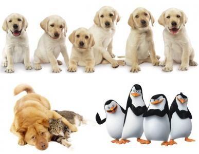 Naklejki Na Sciane Scienne Pieski Kotki Kon 150cm 5737179337 Oficjalne Archiwum Allegro Penguins Animals
