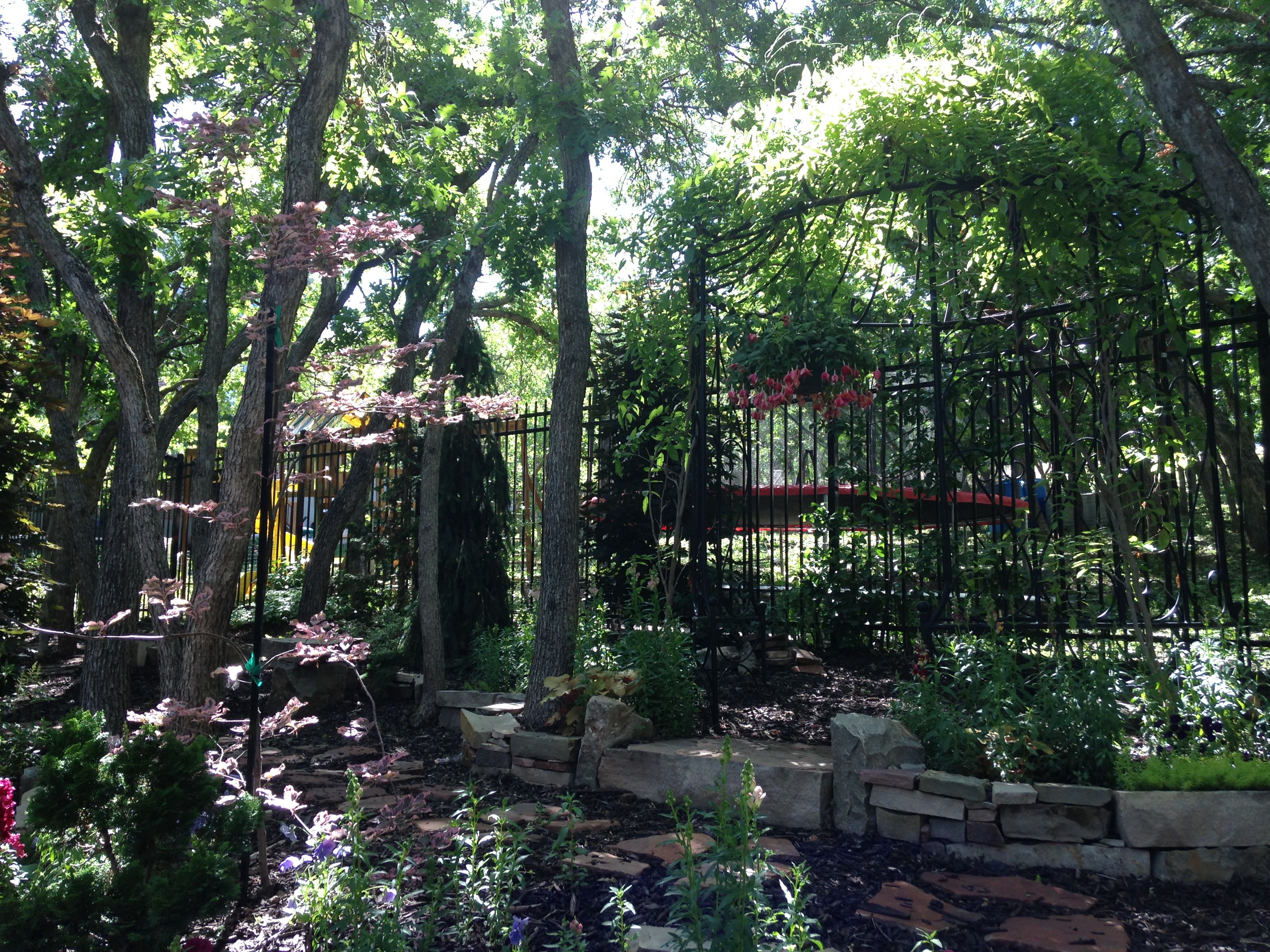 Tricolor beech tree and wisteria on pergola | Landscaping ...