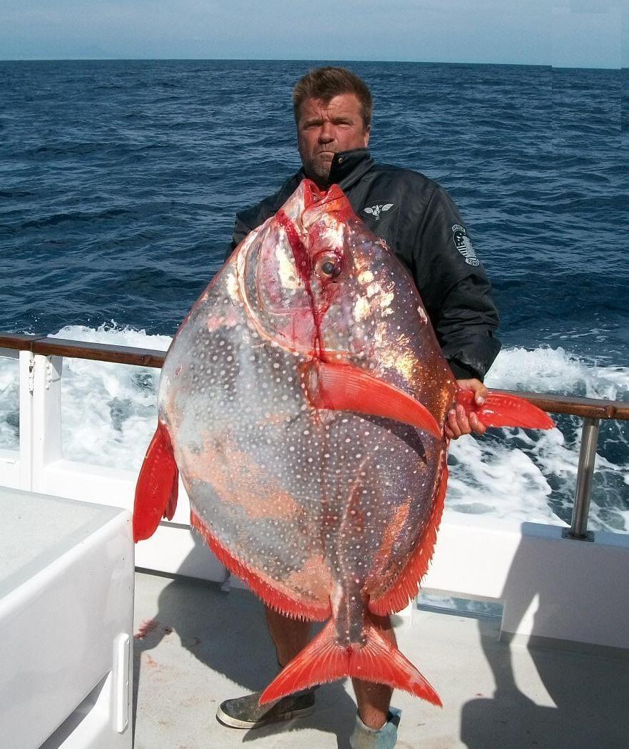 Http 3 Bp Blogspot Com Errakkhjjm8 Uhfli4dv Fi Aaaaaaaakyk Qxfy1gperyi S1600 Opah Lampris Guttatus Biggest Fish In The World Ev Big Fish Ocean Fishing Fish