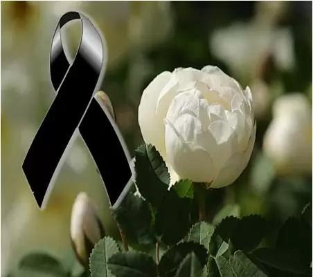 Imagenes De Flores Blancas De Duelo Imagenes De Flores Imagenes De Condolencias Rosas Blancas