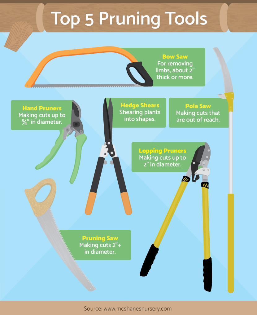 Tools Used For Pruning