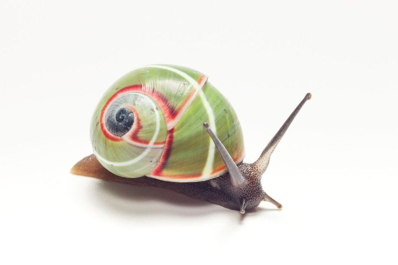 See the diverse beauty of colourful land snails around the ...