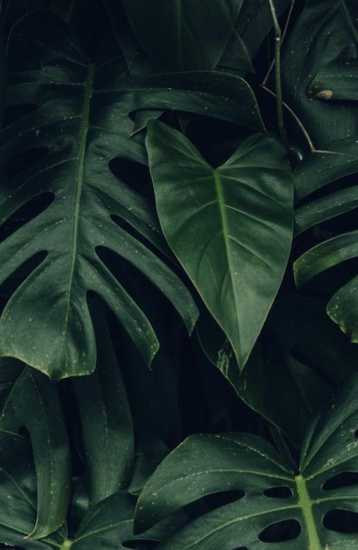 Palm Leaves Hawaii Aesthetic Tropical Plants Plantspo Hawaii Palmleaves Hijau Latar Belakang Seni Murni