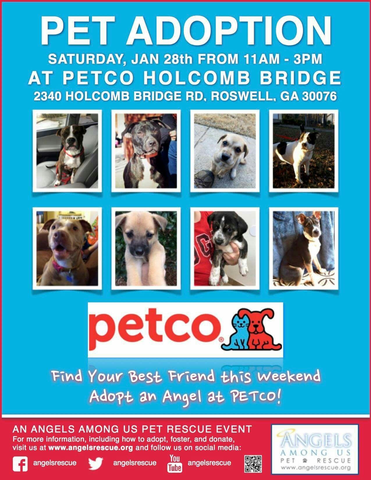 Adoptions This Saturday At Petco Holcomb Bridge Petco Dog Adoption Pet Adoption