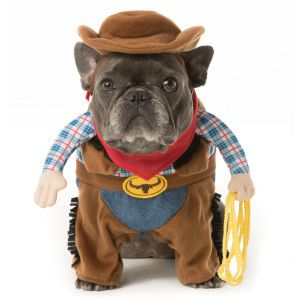 thrills chills pet halloween stand up cowboy pet costume costumes