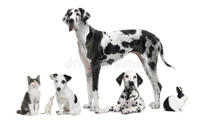 Group Portrait Of Black And White Animals Pets In Front Of White Background Sponsored Black White Black And White Photography Black And White Animals