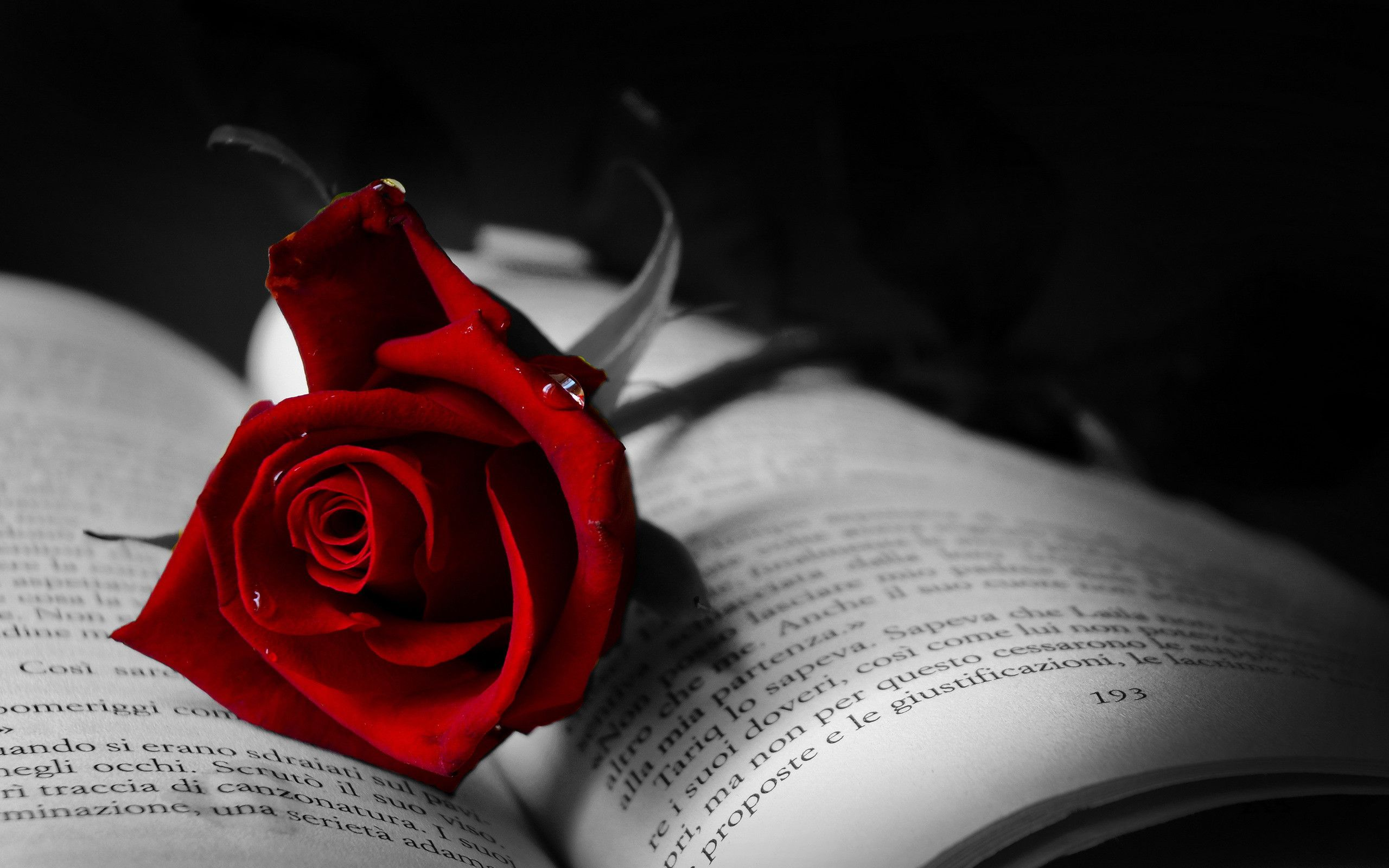 The Symbol Of Love Red Rose On A Book Beautiful Flowers And