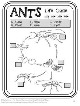 ant life cycle activities summer school activities ants worksheets maze accordion book and. Black Bedroom Furniture Sets. Home Design Ideas