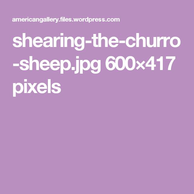 shearing-the-churro-sheep.jpg 600×417 pixels
