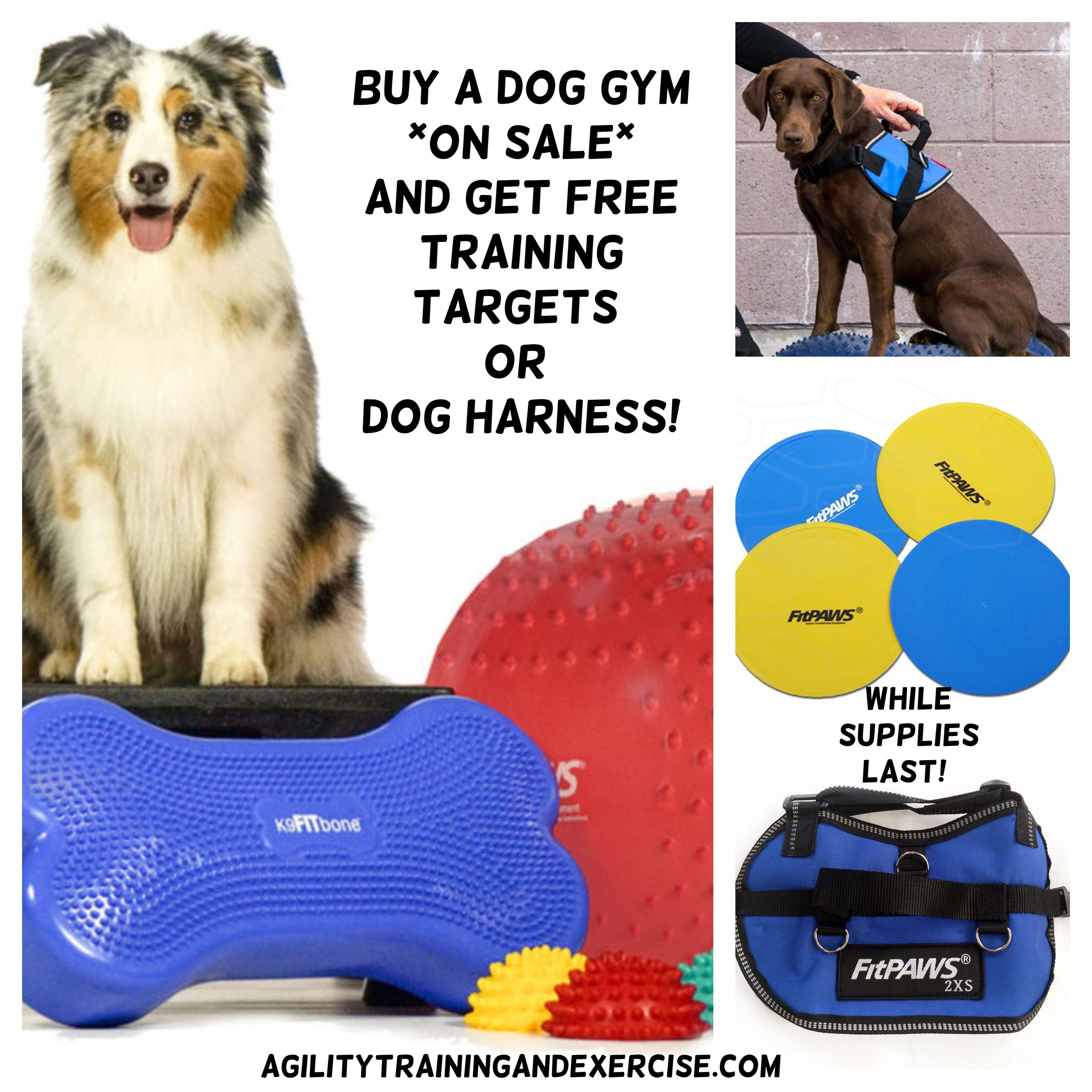 Free Dog Harness Or Training Targets With Dog Gym Purchase Dog Exercise Agility Training For Dogs Dog Training Equipment
