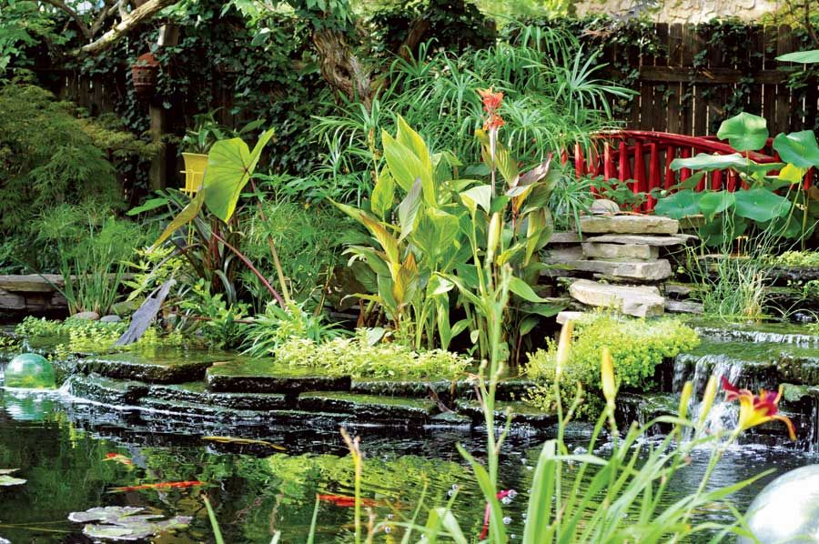 An eye for design an enchanting organic water garden for Pond without filter