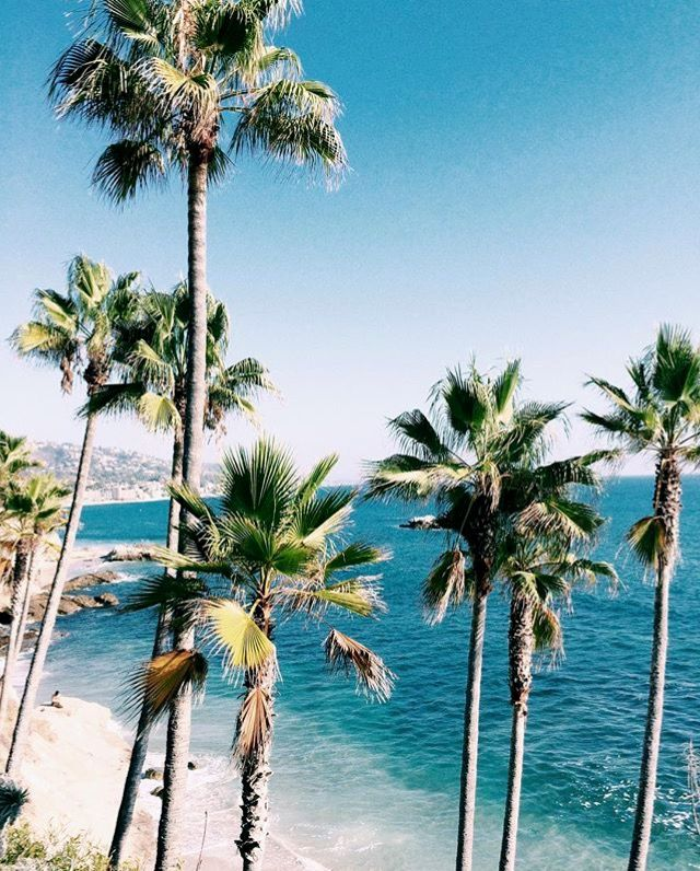 Palm Tree Beach: Pinterest: Javi Kassens ↠