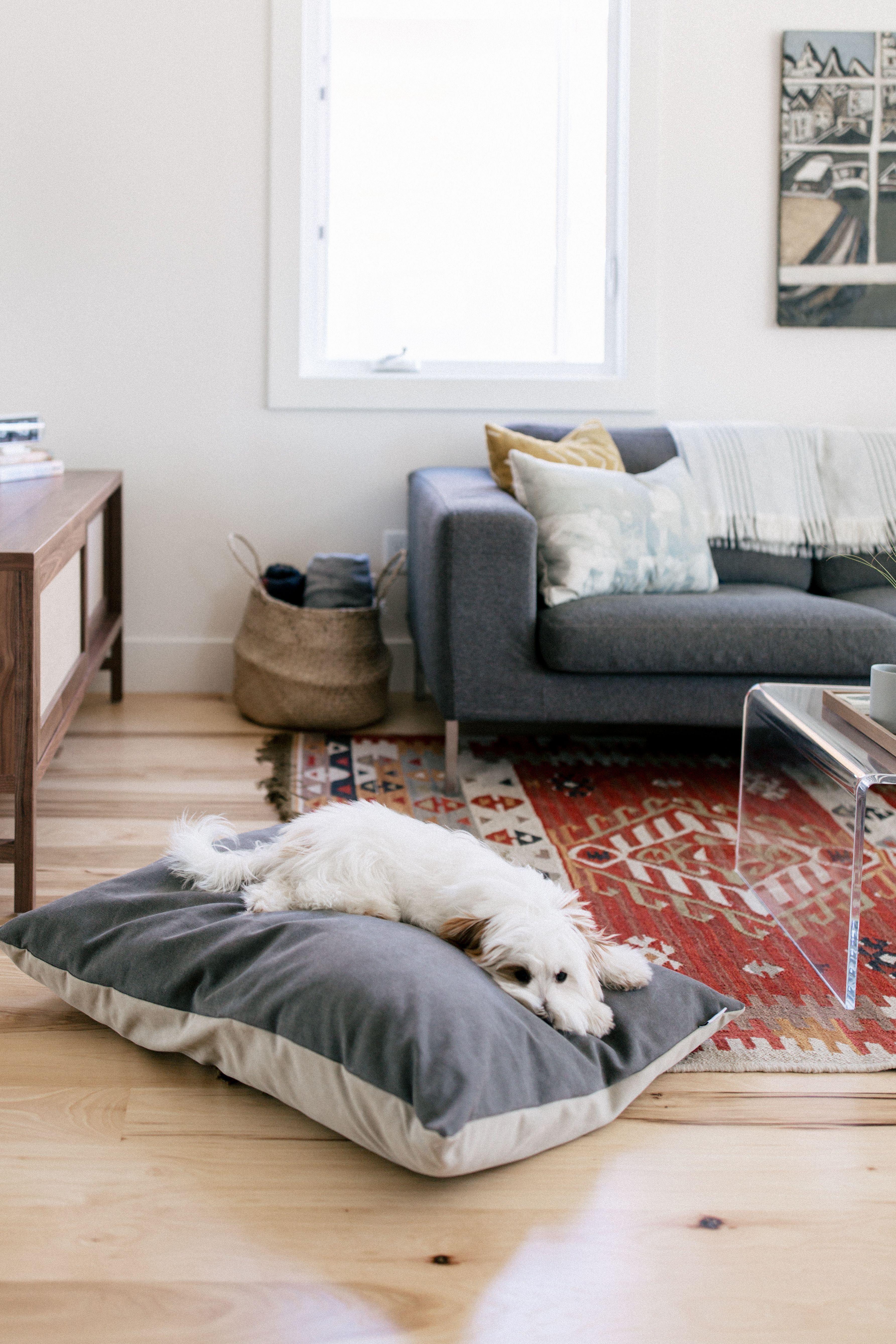 Dog Bed Parachute Dog Bed Bed Cozy Living R