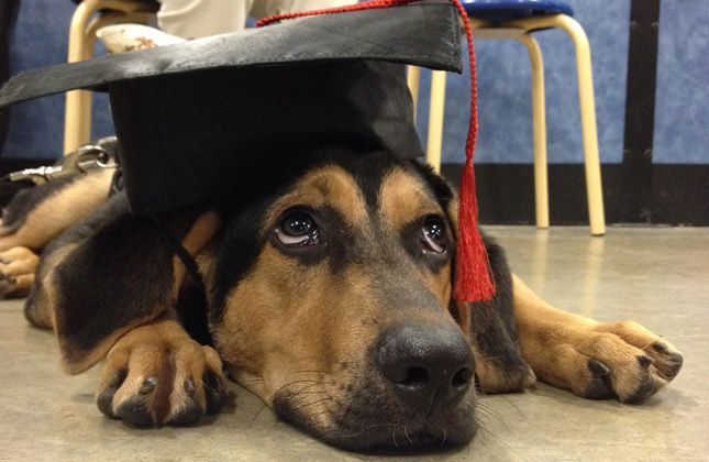 8 Pets Who Know What It Means To Graduate Dog Cat Dogs Cute