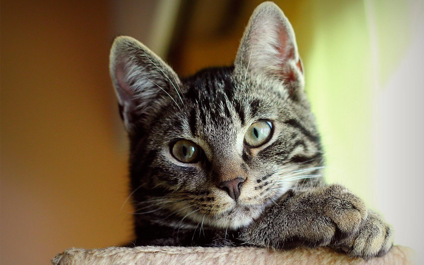 без фото на аву животные красивые кошки питаю слабость