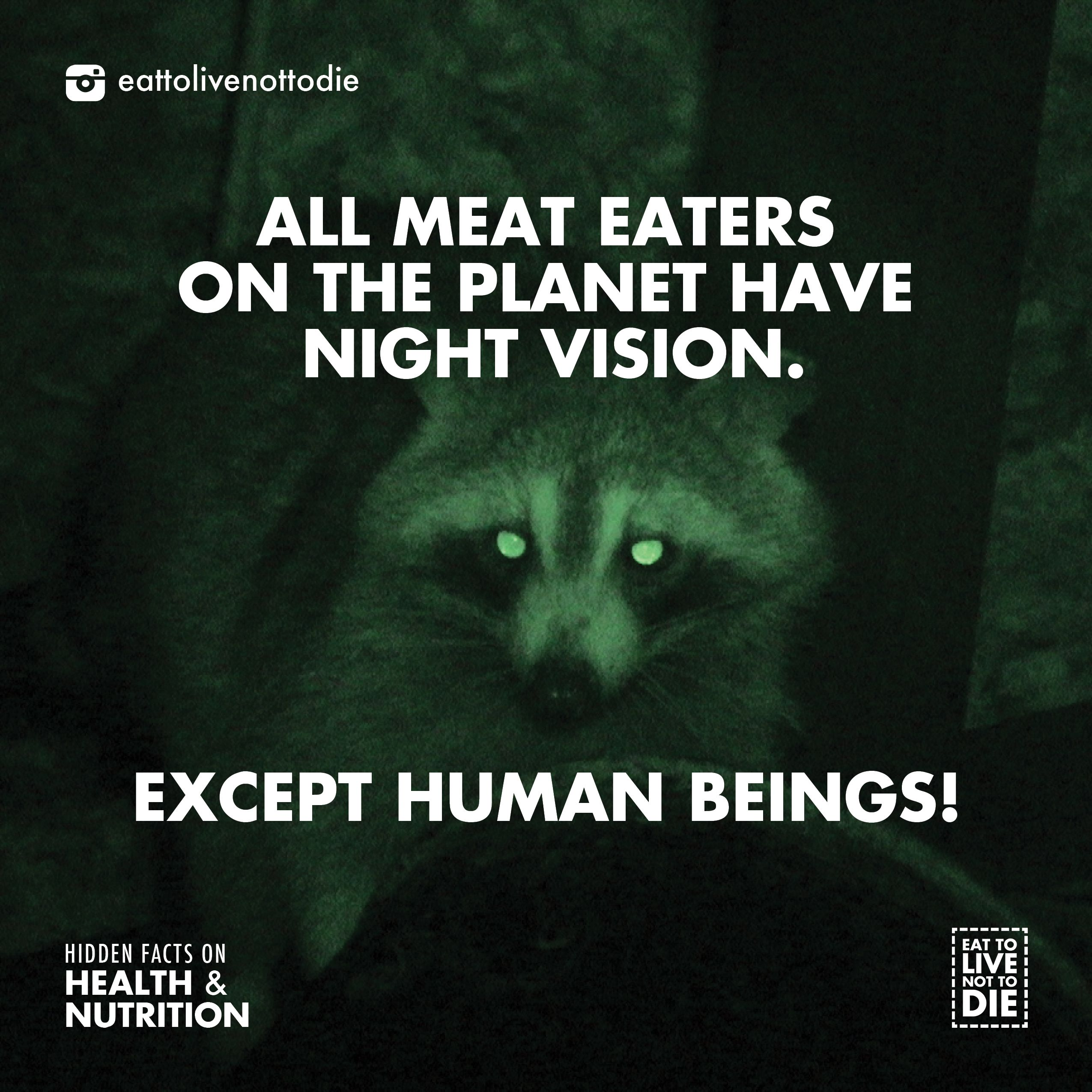 God gave meat eating animals night vision to hunt at night