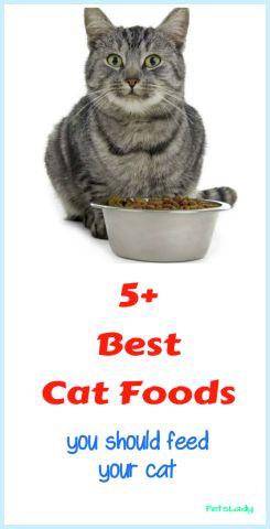 Top 5+ Cat Foods Best Cat Foods Reviewed For 2018 Best
