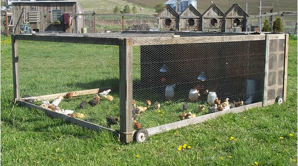 I Want One Of These With A Little More Coverage For My Meat Birds This Year Small Scale