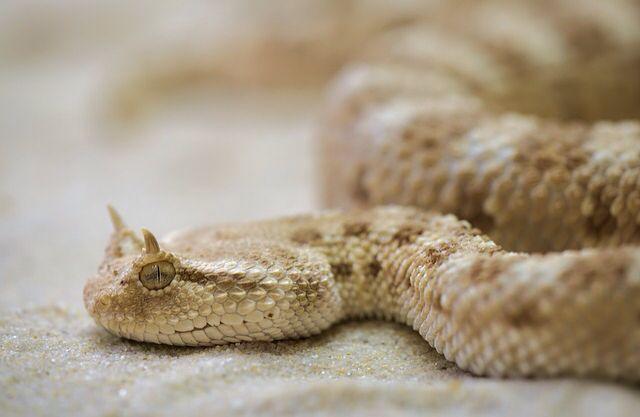 قصة Story قصة مع الثعبان قد تكون قصتك يحكي أن سيده عثرت على ثعبان كبير جائع بردان فقررت أن تنقذه مما يعانيه فأخذته ا Snake Snake Terrarium Poisonous Snakes