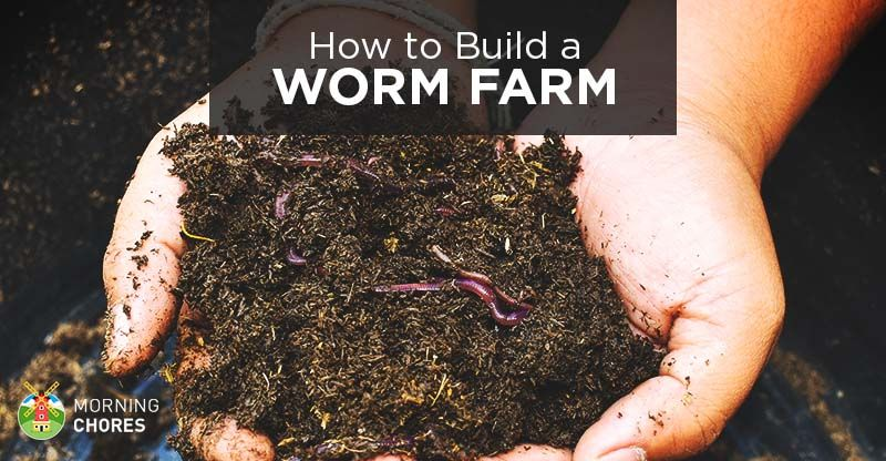 How to Build a Worm Farm at Home (and it for